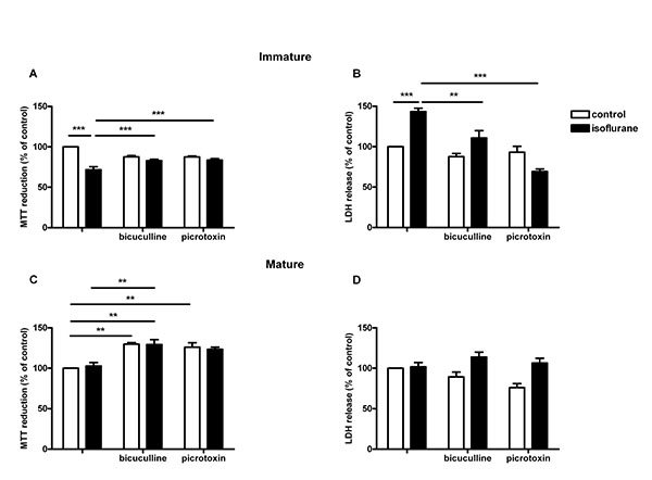 isoflurane but not fentanyl causes apoptosis in immature primary neuronal cells